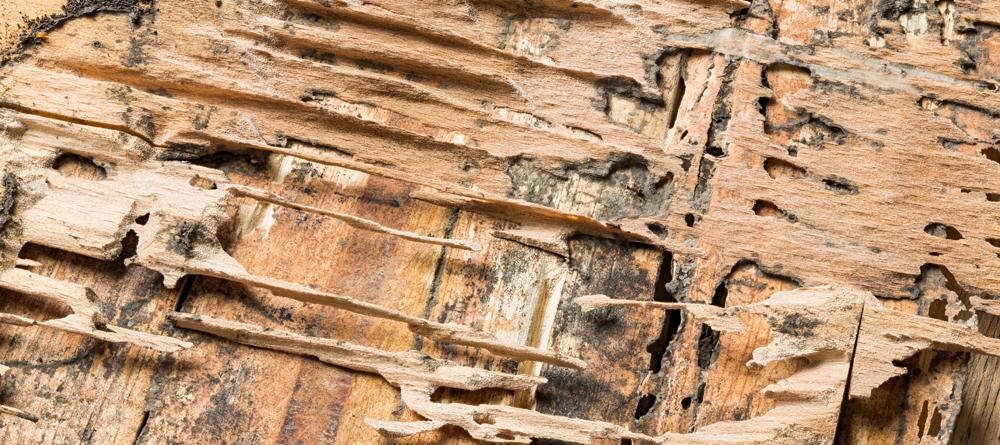 Termite Contract